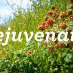 Restorative Experience- Spring
